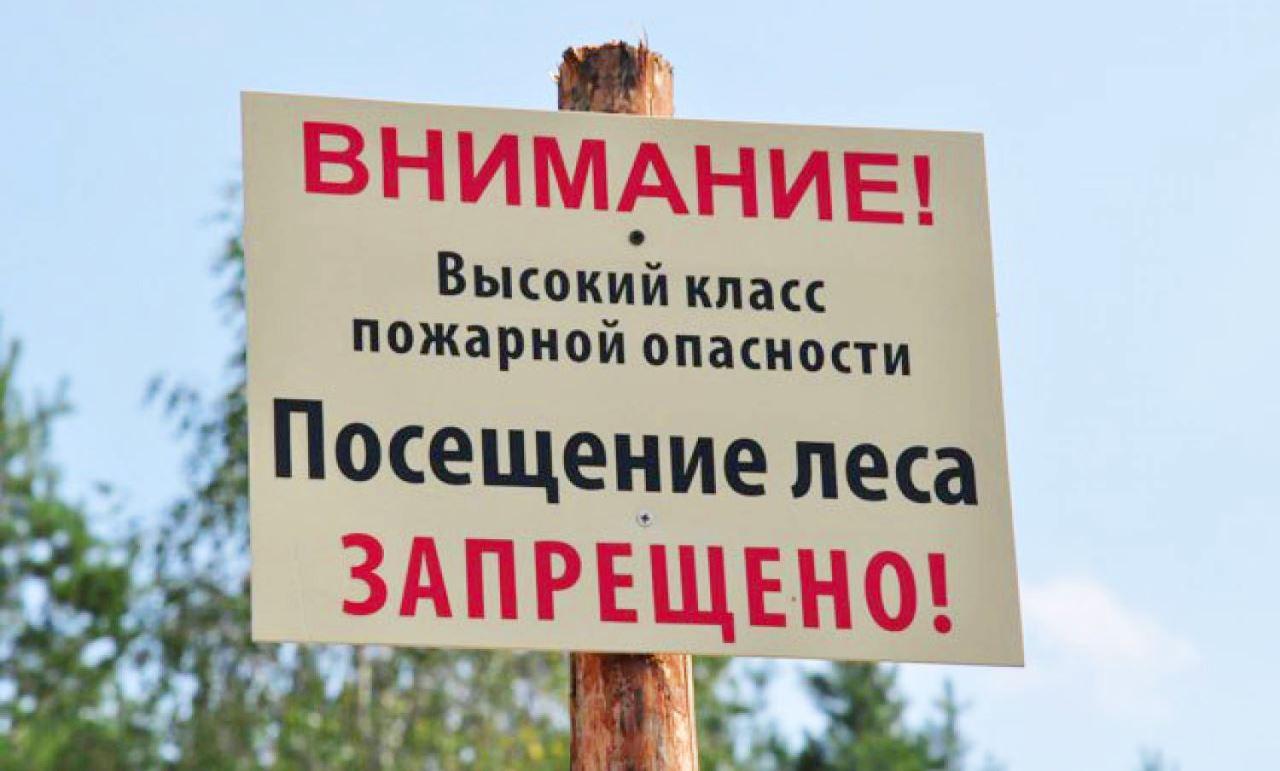 В Ростовской области продлен режим ограничения пребывания граждан в лесах