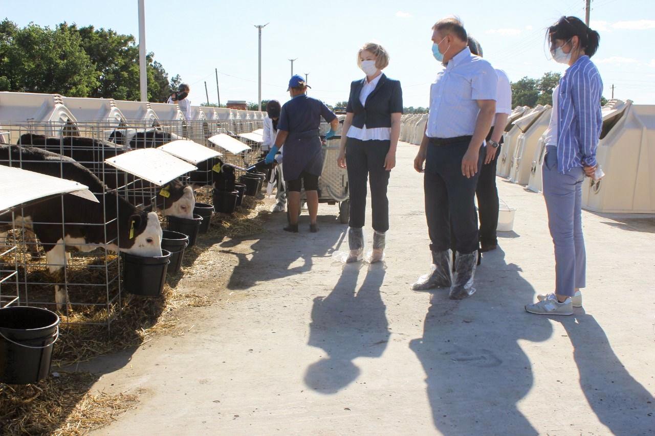 Молочное животноводство — отрасль опережающего развития