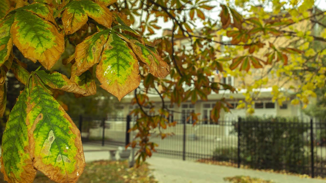 Осенние каникулы продлили